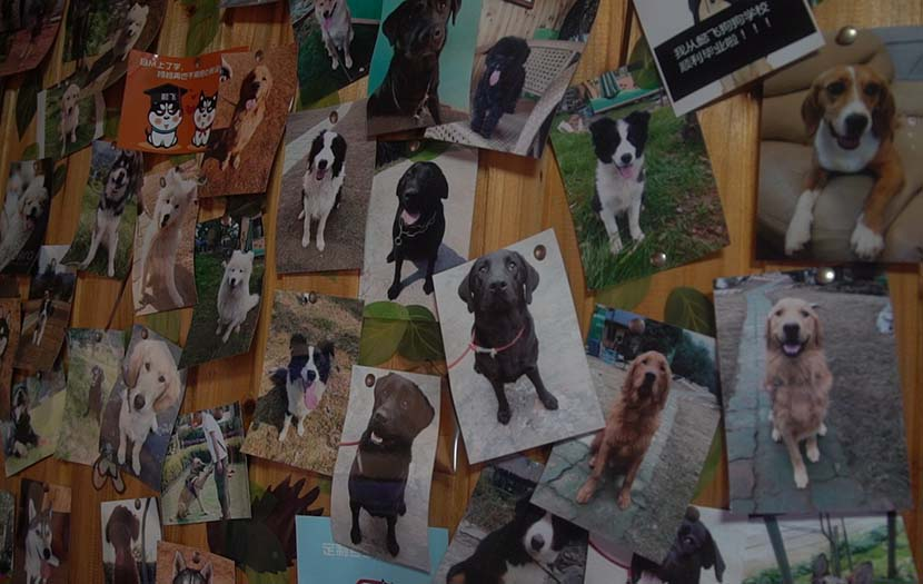 Bai Yan's office wall at the base is full of pictures of his police dogs and the pets that owners have sent to the training school, Hangzhou, Zhejiang province, Dec. 20, 2016. Ma Lin for Sixth Tone